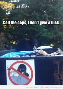Bears Don't Follow Rules